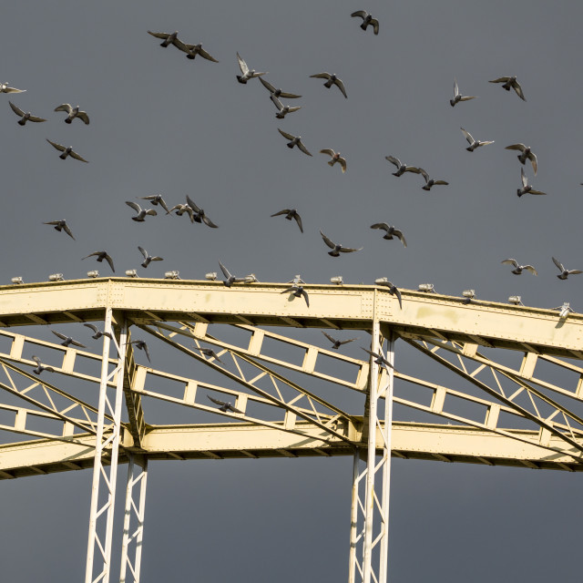 """Pigeons Taking off from the Bridge"" stock image"