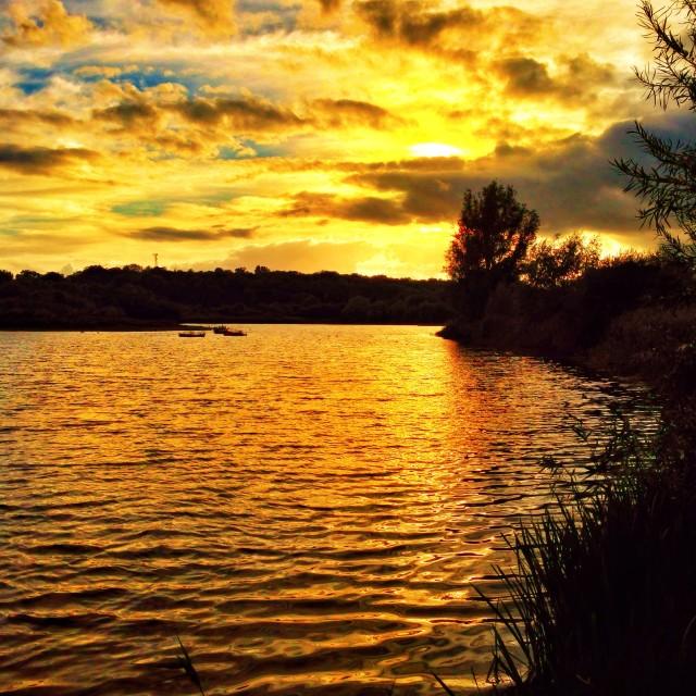 """Evening sunset at a lake"" stock image"