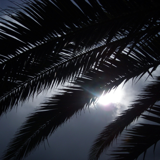 """""""Palm leaves"""" stock image"""
