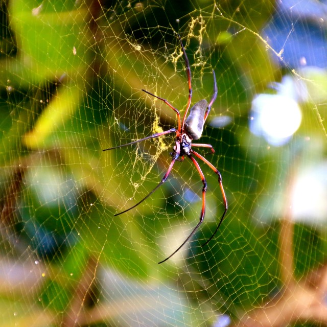 """""""Spider in its web.."""" stock image"""