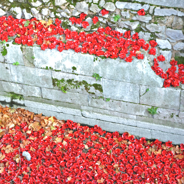 """Poppy Steps"" stock image"