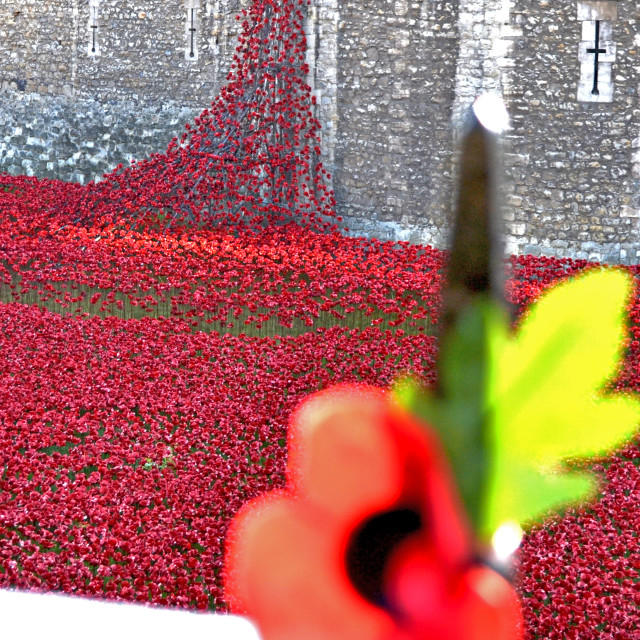 """The Tower of Poppies"" stock image"