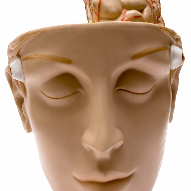 """Human Brain with Clipping Path"" stock image"