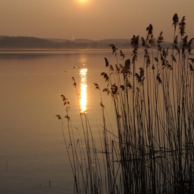 """Morning at Lake Constance"" stock image"