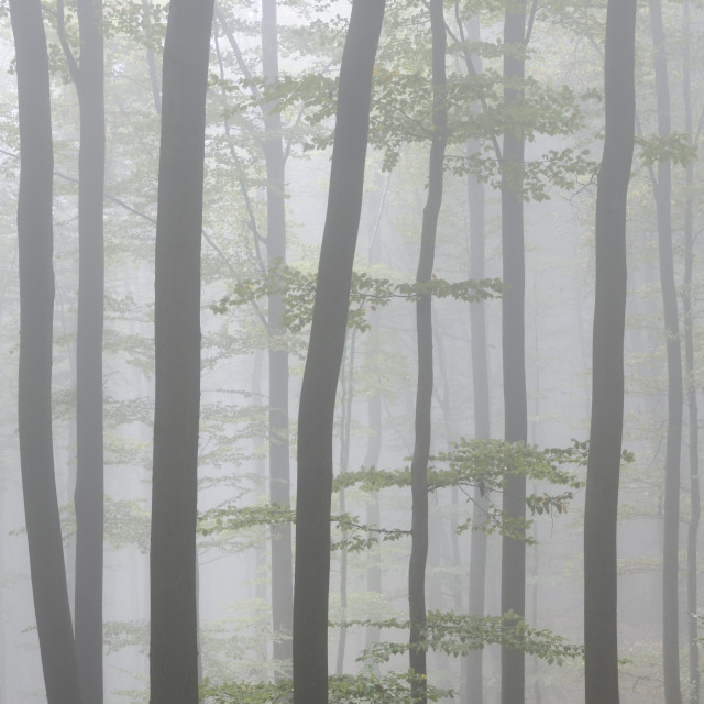 """""""Forest"""" stock image"""