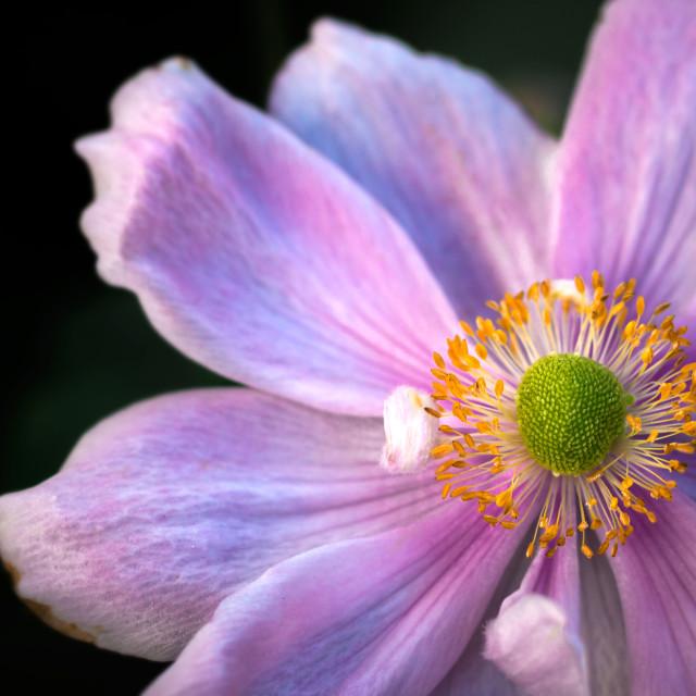 """Flowercup"" stock image"