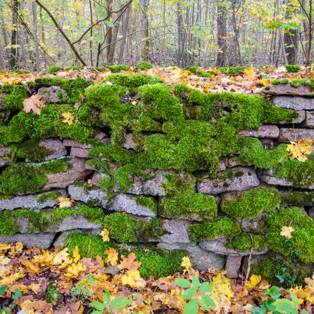 """""""Mossy stonewall detail"""" stock image"""