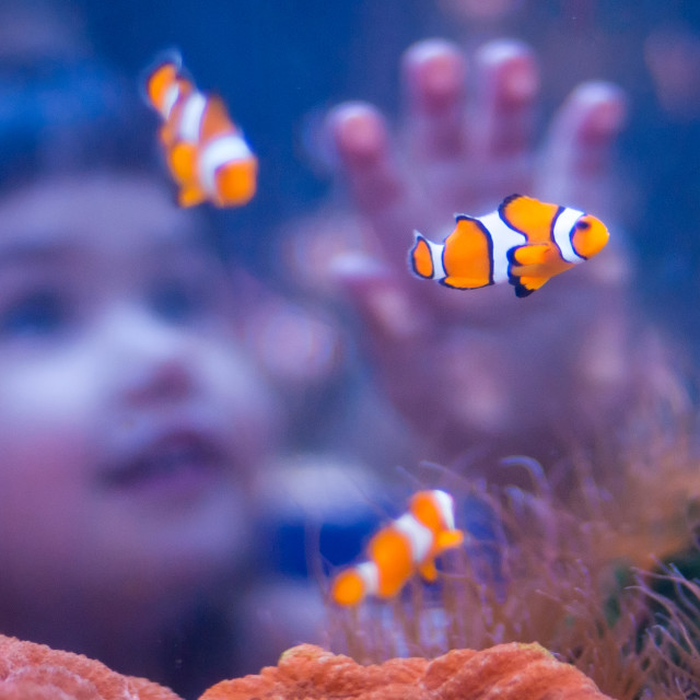 """Watching Nemo"" stock image"