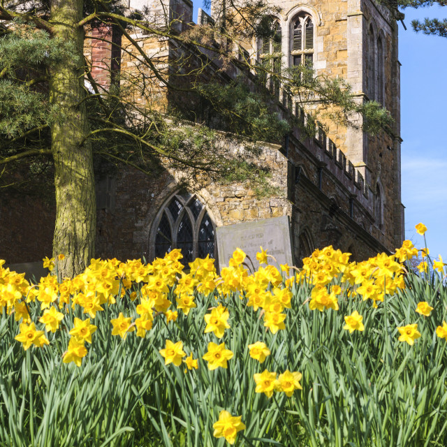 """Church and gravestone with daffodils"" stock image"