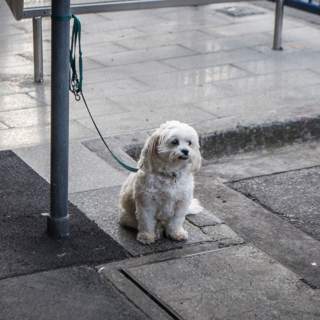 """Waiting For My Owner"" stock image"