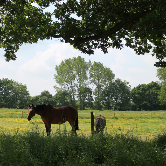 """""""Horse and Foal"""" stock image"""