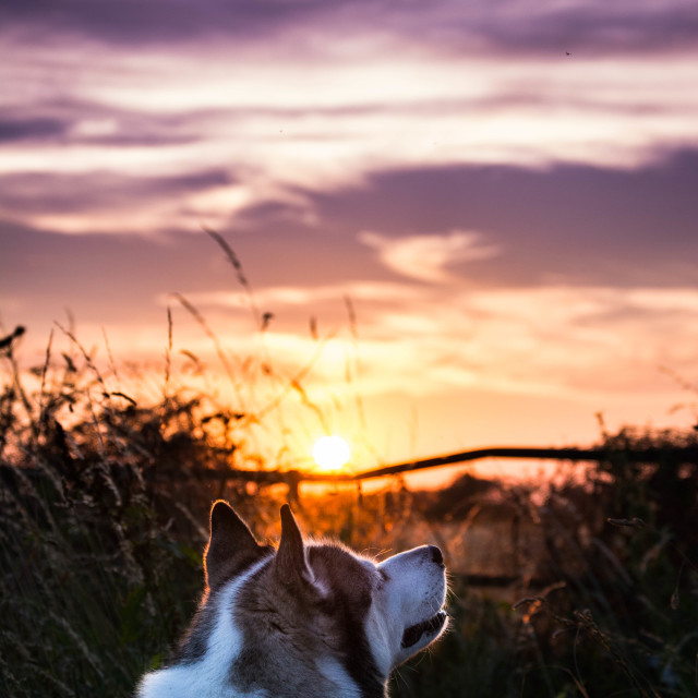 """Kodi During A Sunset"" stock image"