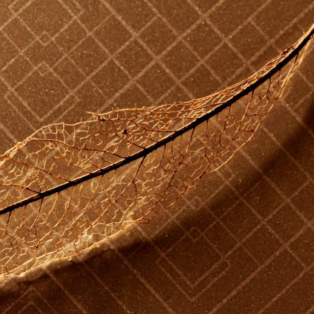"""""""Leaf litter"""" stock image"""