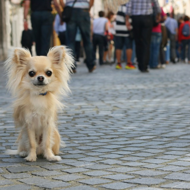 """City dog"" stock image"