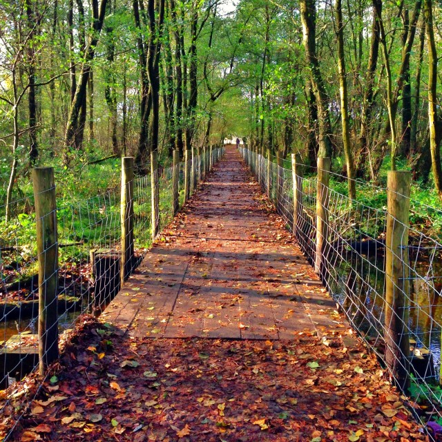 """""""Walkway in the forest"""" stock image"""