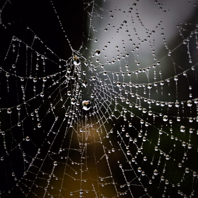 """The web"" stock image"