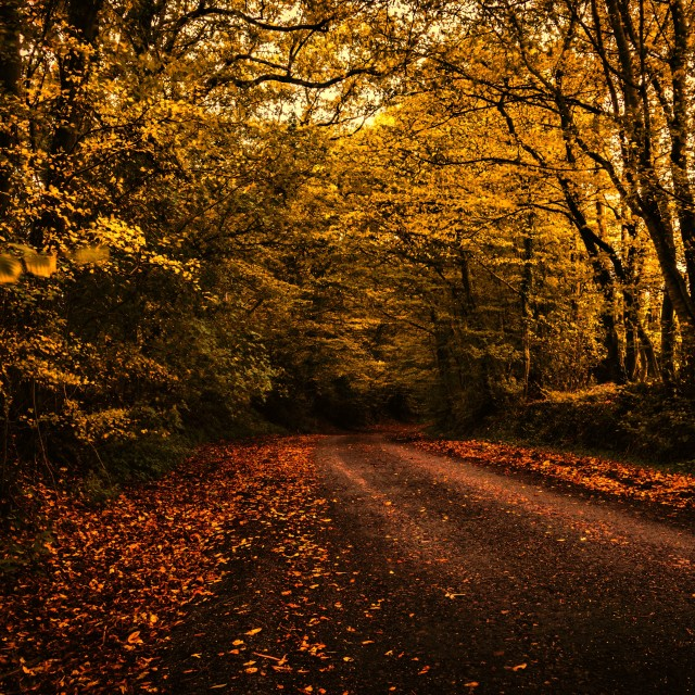"""Autumn lane"" stock image"