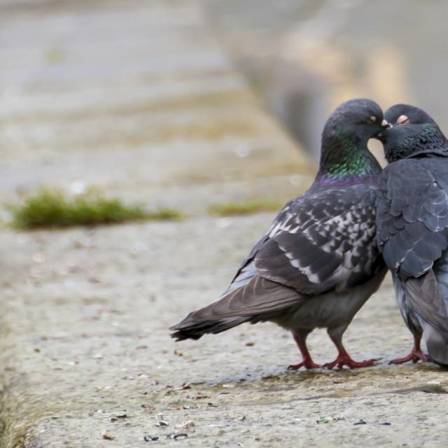 """Love Birds!"" stock image"