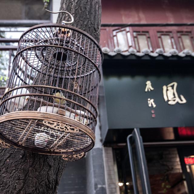 """""""Xi'an birdcage"""" stock image"""