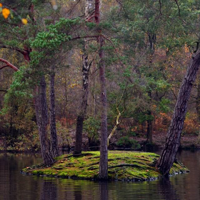 """Heath Pond Island Reflections in Autumn"" stock image"