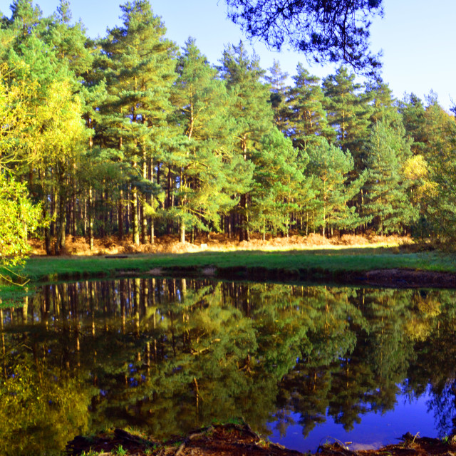"""""""Forest Reflections"""" stock image"""