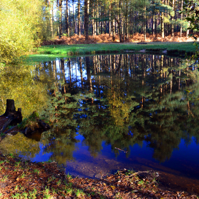 """""""Deep Blue Reflections"""" stock image"""