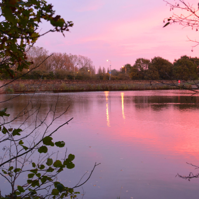 """""""The Pond at Dawn"""" stock image"""