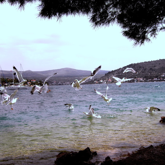 """""""Rampaging Seagulls 2"""" stock image"""