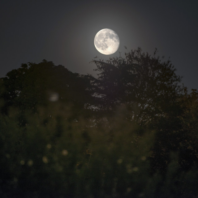 """Moonrise over the treeline"" stock image"