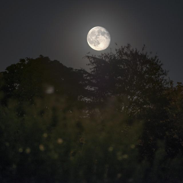 """Moonrise over the treeline"" stock image"