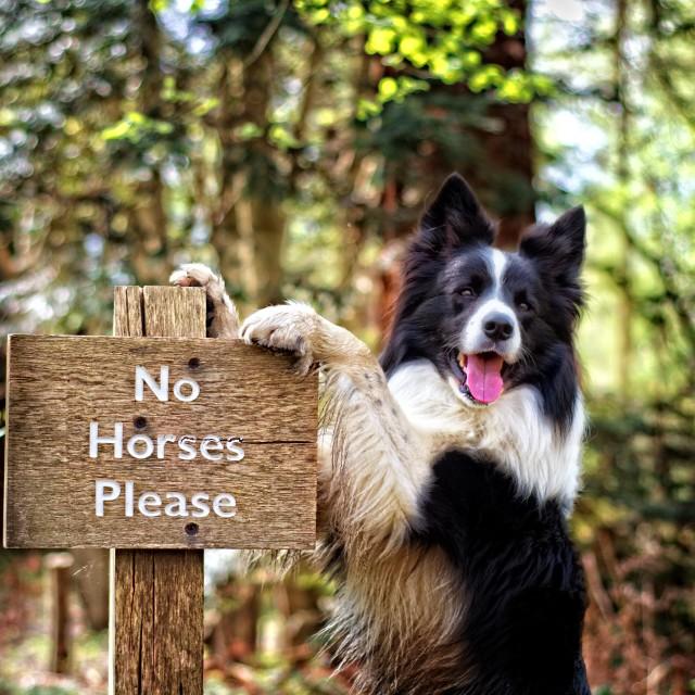 """No Horses Please"" stock image"
