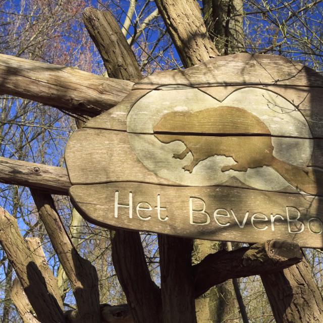 """Beaver path"" stock image"
