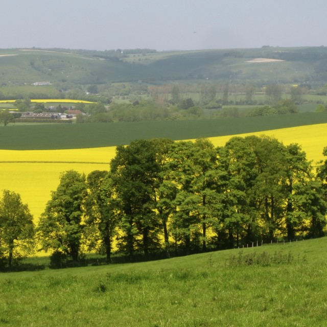 """South Downs in summer"" stock image"