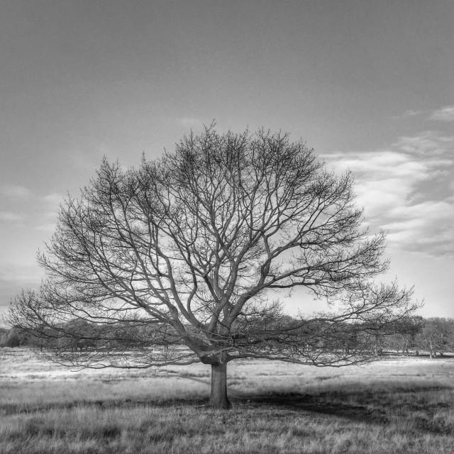 """Skeletal Autumnal Tree"" stock image"