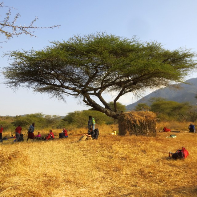"""Maasai boma under Acacia tree"" stock image"