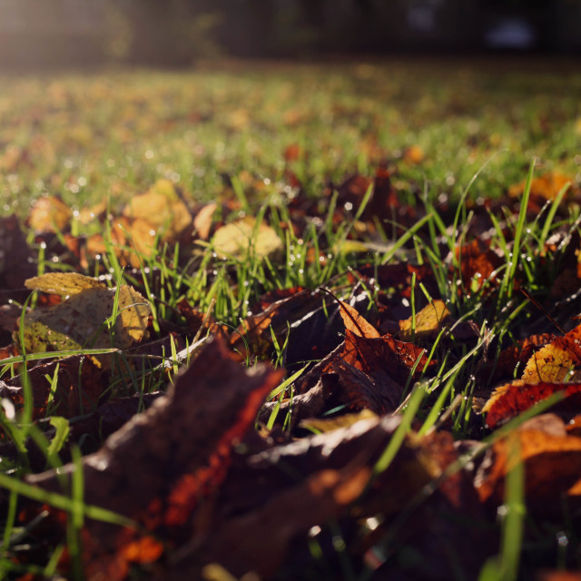 """Fallen leaves and morning dew"" stock image"