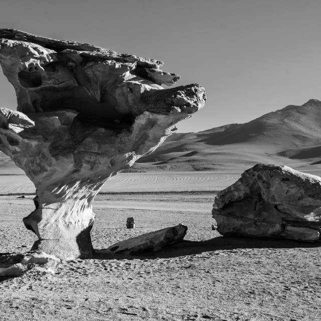 """Stone tree, Bolivia"" stock image"