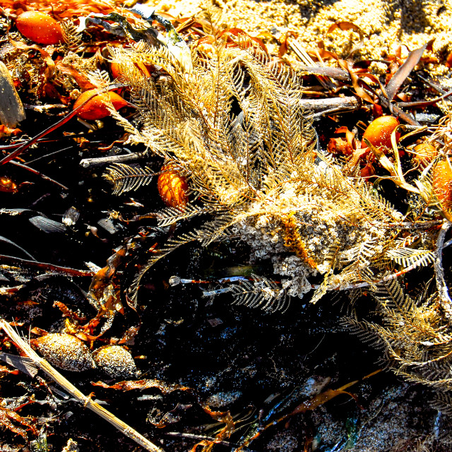 """Feathery Flotsam From The Sea"" stock image"