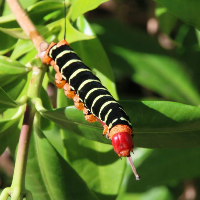 """""""Big Caterpillar"""" stock image"""