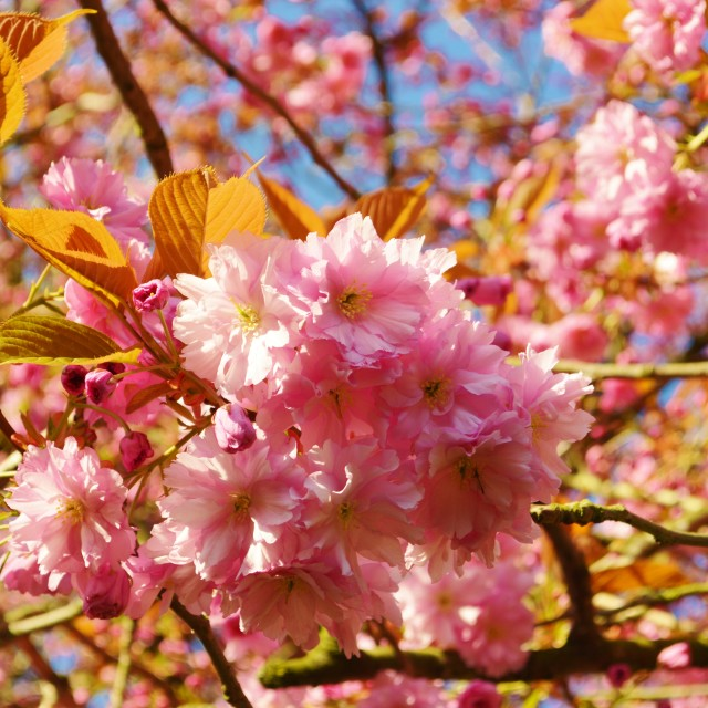 """Colourful Spring Blossom."" stock image"