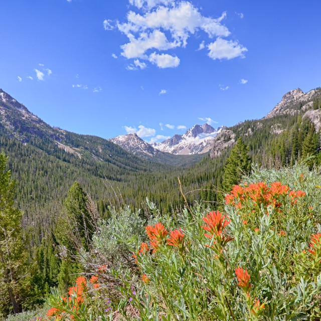 """Indian Paintbrush, Sawtooth National Recreation Area, ID"" stock image"