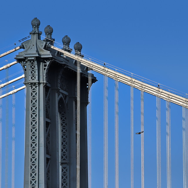 """""""Manhattan Bridge and the Fight of an Eagle"""" stock image"""