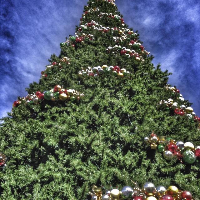 """""""O, Christmas Tree!"""" stock image"""