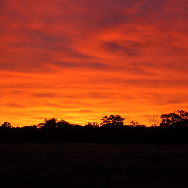 """Fiery Sunset In Australian Bush"" stock image"