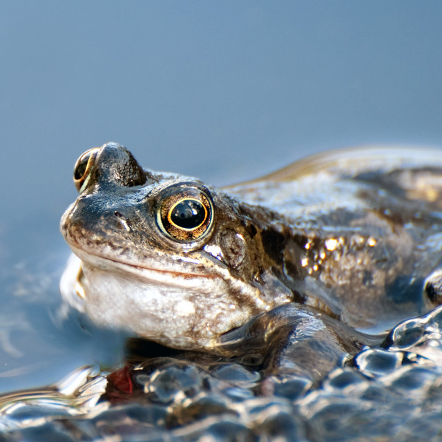 """""""Spawning time again"""" stock image"""