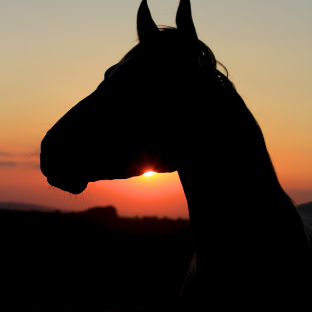 """Horse Silhouette at Sunset"" stock image"