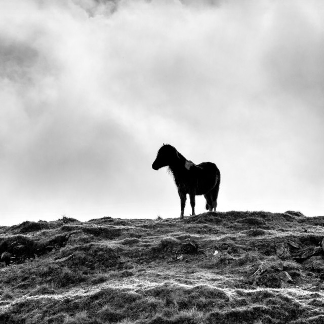 """Dartmoor Sentry"" stock image"