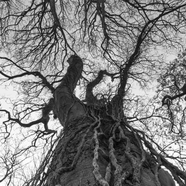 """Mono Tree"" stock image"