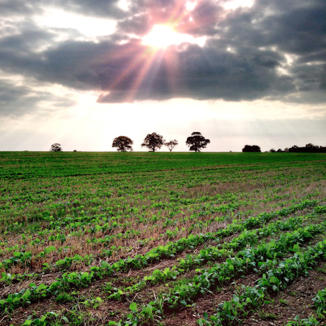 """""""Sun rays over the field"""" stock image"""
