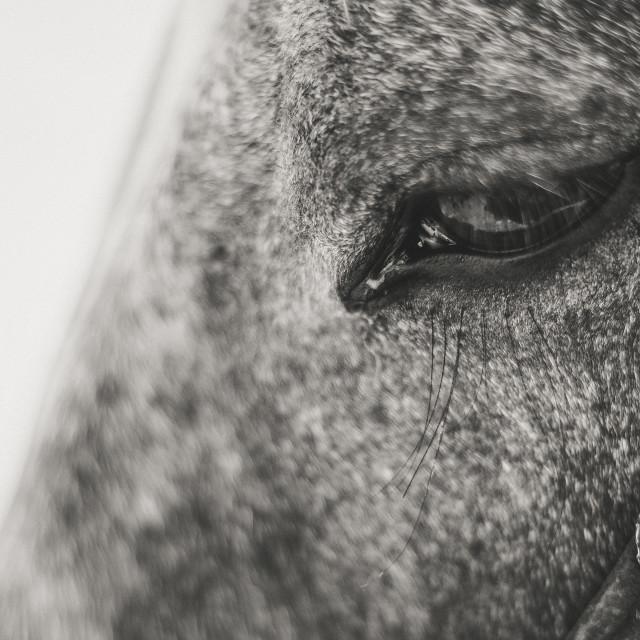 """""""Horse eye"""" stock image"""